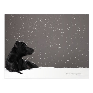 Puppy lying in snow watching snowflakes postcard