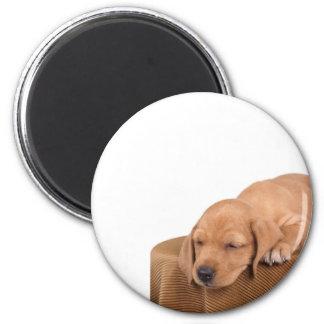 puppy magnet
