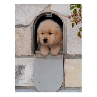 Puppy Mail Postcard
