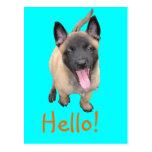 puppy malinense postales
