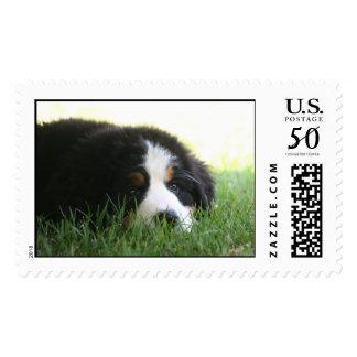 Puppy Mia Postage