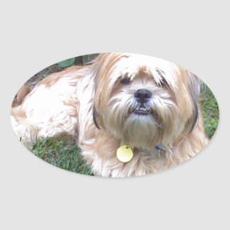 Puppy Mill Survivor - Give Mill Dogs a 2nd Chance! Oval Sticker