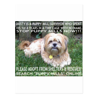 Puppy Mill Survivor - Give Mill Dogs a 2nd Chance! Postcard