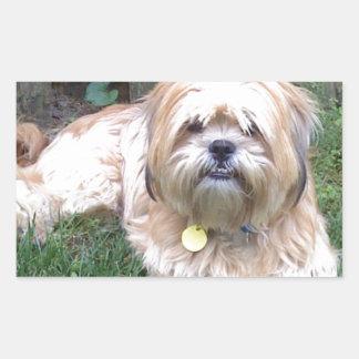 Puppy Mill Survivor - Give Mill Dogs a 2nd Chance! Rectangular Sticker