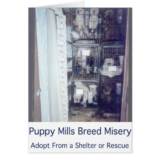 Puppy Mills Breed Misery Card