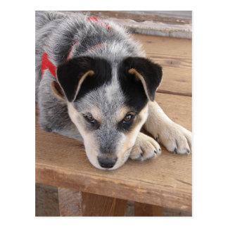 Puppy Mischief Postcard
