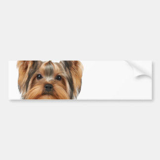 Puppy of the Yorkshire Terrier Bumper Sticker