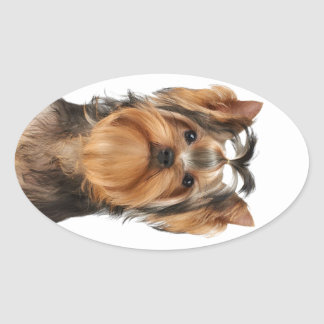 Puppy of the Yorkshire Terrier Oval Sticker