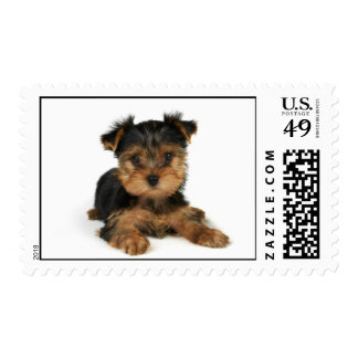 Puppy of the Yorkshire Terrier Postage