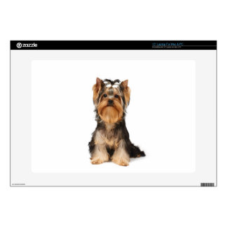 Puppy of the Yorkshire Terrier Laptop Skins
