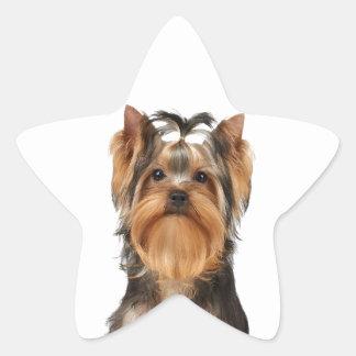 Puppy of the Yorkshire Terrier Star Sticker