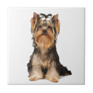 Puppy of the Yorkshire Terrier Tiles