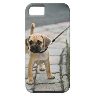 Puppy on leash iPhone SE/5/5s case