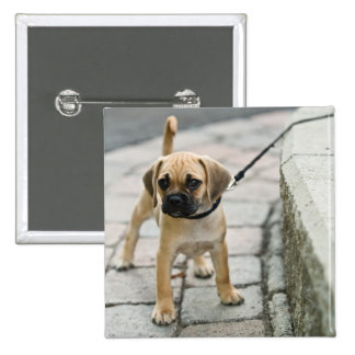 Puppy on leash pinback button