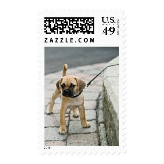 Puppy on leash postage