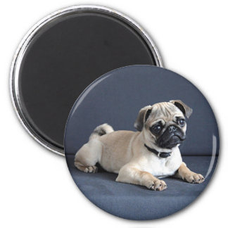 Puppy On Lounging Couch 2 Inch Round Magnet