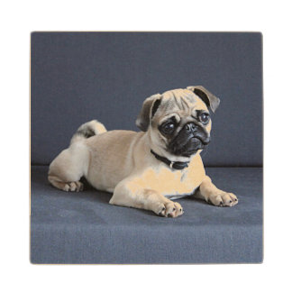 Puppy On Lounging Couch Wooden Coaster