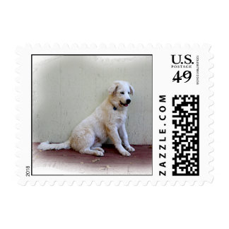 Puppy on Porch Postage