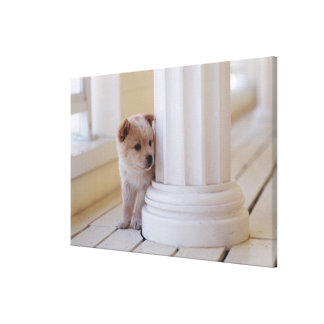 Puppy peeking out from behind a column canvas print