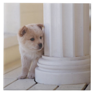 Puppy peeking out from behind a column ceramic tile
