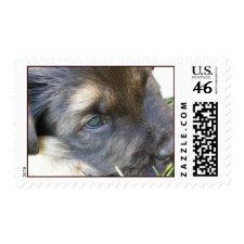 Puppy Photo Postage stamp