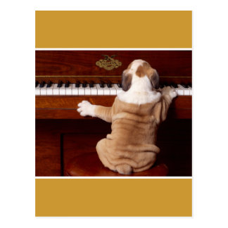 Puppy Pianist Postcard