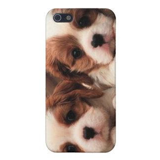 Puppy Pictures iPhone SE/5/5s Cover