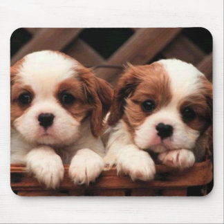 Puppy Pictures Mouse Pad