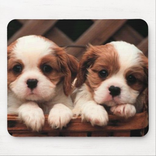 Puppy Pictures Mousepad