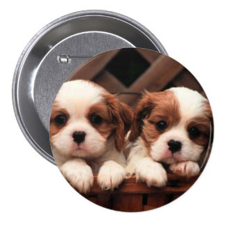 Puppy Pictures Pinback Button