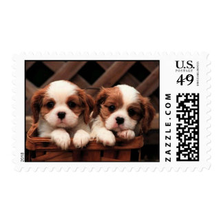Puppy Pictures Postage Stamp