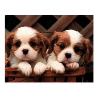 Puppy Pictures Postcard