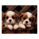 Puppy Pictures Poster