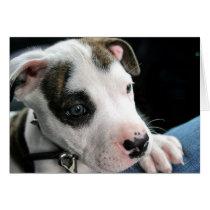 Puppy Pit Bull T-Bone