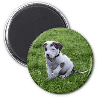 Puppy Pit Bull T-Bone 2 Inch Round Magnet