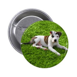 Puppy Pit Bull T-Bone Button