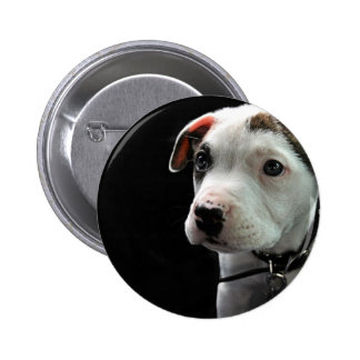 Puppy Pit Bull T-Bone Button