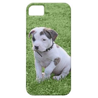 Puppy Pit Bull T-Bone iPhone SE/5/5s Case