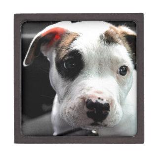 Puppy Pit Bull T-Bone Jewelry Box
