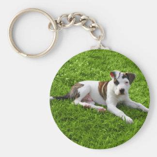 Puppy Pit Bull T-Bone Keychain