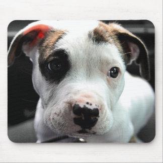 Puppy Pit Bull T-Bone Mouse Pad