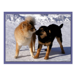Puppy play Postcards