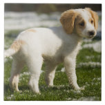 Puppy playing in the snow ceramic tiles
