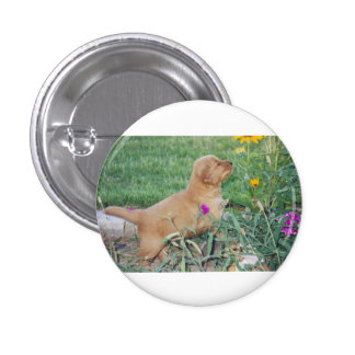 Puppy playing with flowers button