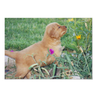 Puppy playing with flowers card