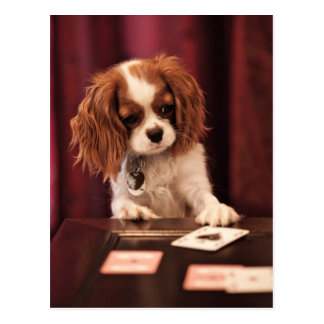 Puppy plays with cards on coffee table.