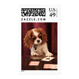 Puppy plays with cards on coffee table. postage stamp
