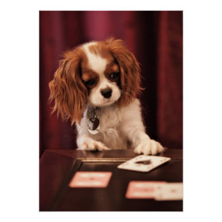 Puppy plays with cards on coffee table. posters