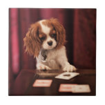 Puppy plays with cards on coffee table. tiles