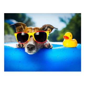 Puppy Pool Party Postcard